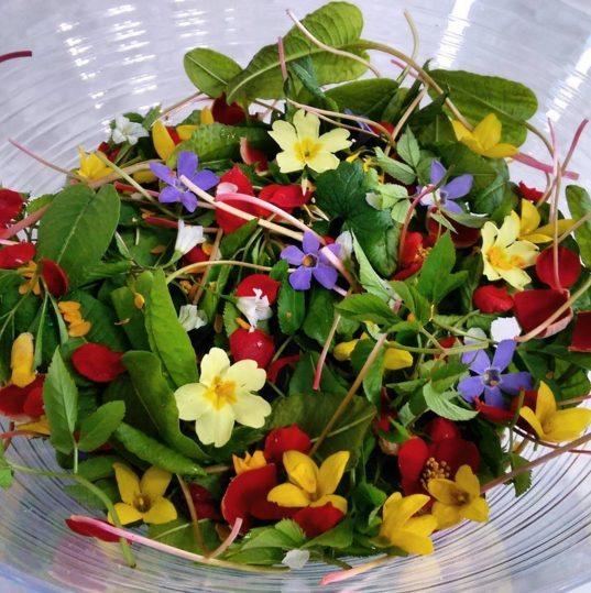 Foraged wild salad