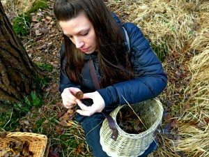 Picking winter chanterelles