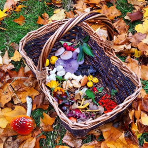 A colourful collection of wild edible fruits and fungi in a wicker basket on a bed of fallen leaves
