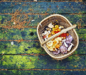 Aerial shot of a wicker basket containing a colourful array of early winter edible mushrooms including lilac wood boletes, yellow, orange, peach and red coloured waxcaps, creamy hedgehog fungus, brown-capped boletes of different kinds and a red-and-white fly agaric toadstool, the basket sitting on a wooden picnic table top covered in green algae and coppery larch needles