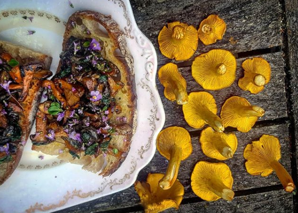 Fresh yellow chanterelles beside a chintzy plate of sauteed wild mushrooms on toast topped with pink thyme flowers on a rustic grey wooden outdoor tabletop
