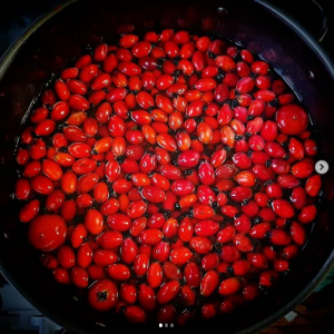 Rosehips floating in a big stainless steel pan about to be cooked for making puree and ketchup